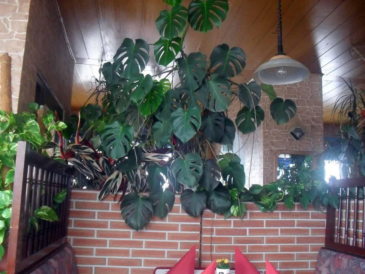 Viele echte Grünpflanzen